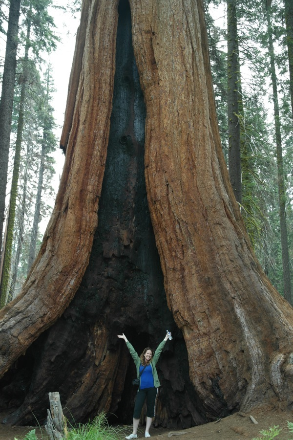 woman standing in front of giant sequoia tree