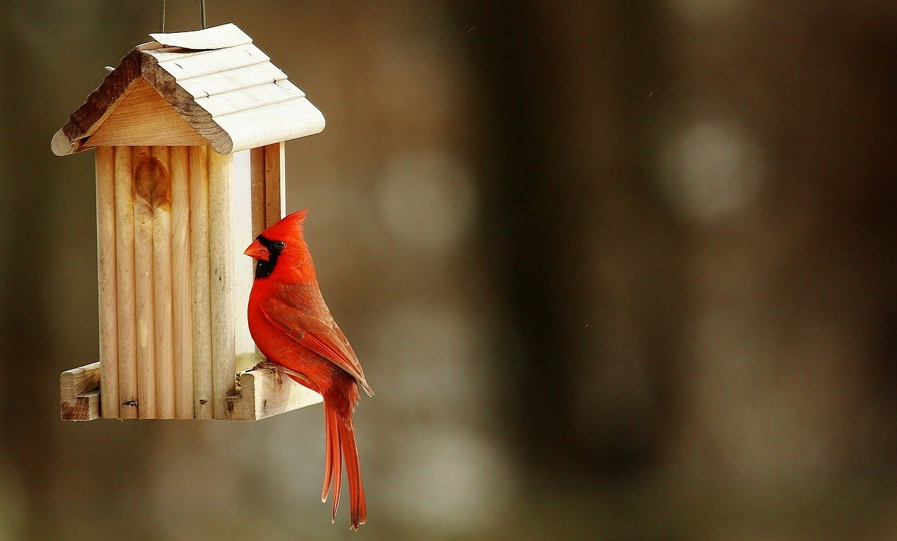 Birdhouse Kit