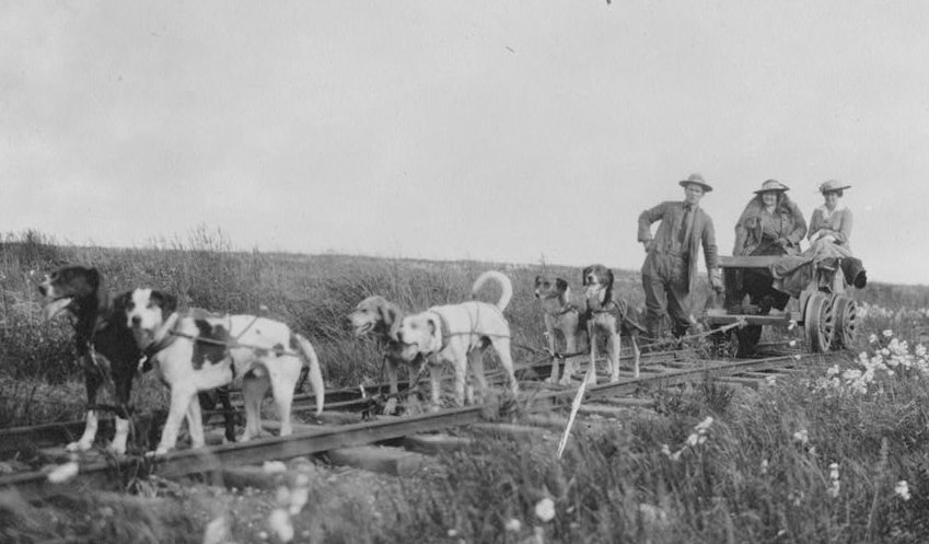 A group of cattle standing on top of a field
